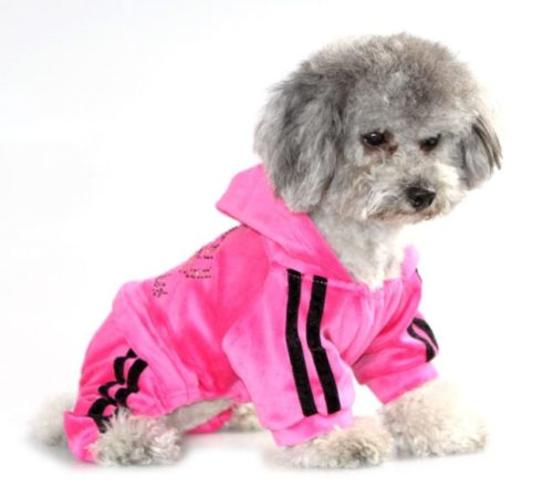 7.SEIMAI Dog Hoodies Jumpsuit for Small Dog Cat Puppy Rhinestone Crown Soft Velvet Winter Hooded Pajamas Tracksuit Outfits Sportswear Jacket with Hat Training Outdoor